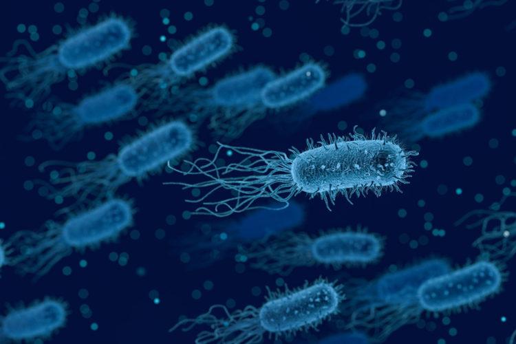 Legionella.