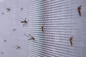 mosquitos plagas