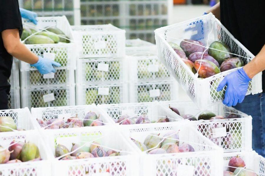 seguridad alimentaria, Aenor