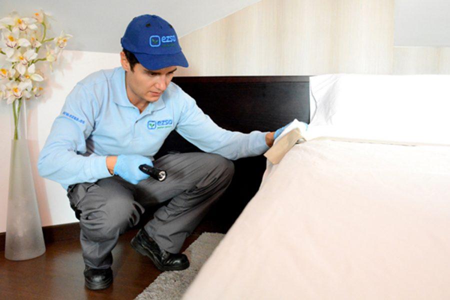 Eliminar chinches cama cort